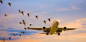 当飞机飞行时遇上小鸟,灾难就有可能会发生。飞机的发动机引擎在启动时会将附近的小鸟吸入其中,从而导致飞机故障。有研究表明有些鸟类会故意向飞机冲撞,或许是想示意一下这里是我的地盘。不论鸟类是有意还是无意撞击了飞机,都会给飞机安全带来隐患,同时也威胁到了这些鸟儿正常的生活。全世界的工程师都在研究如何预防鸟击飞机的发生,除了传统的研发手段,利用CAE软件仿真模拟已经成为工程师们新的利器。